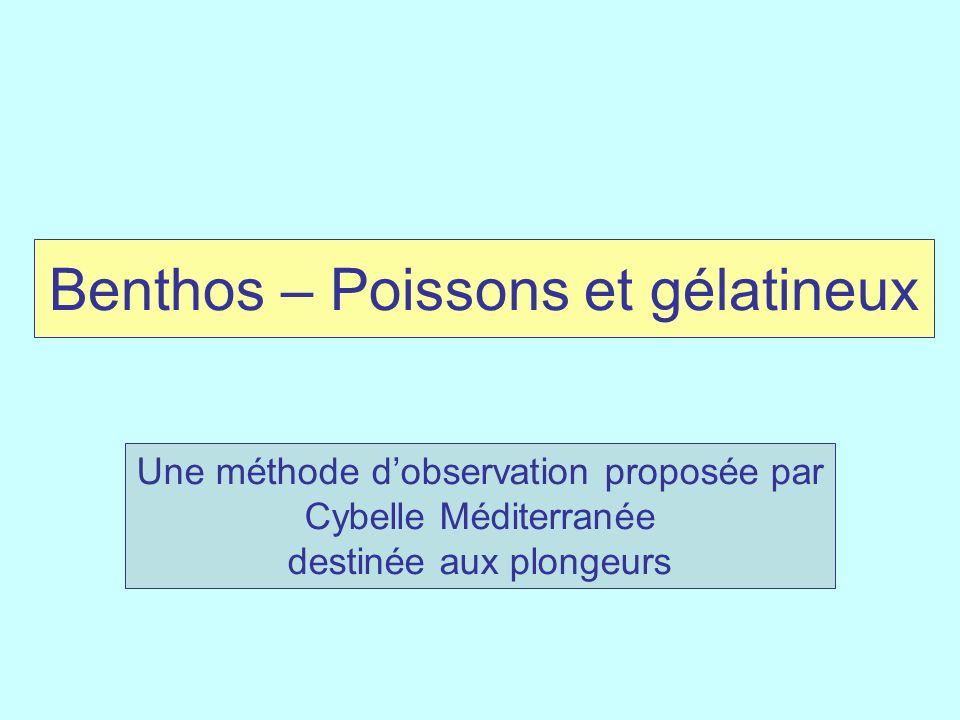Benthos – Poissons et gélatineux