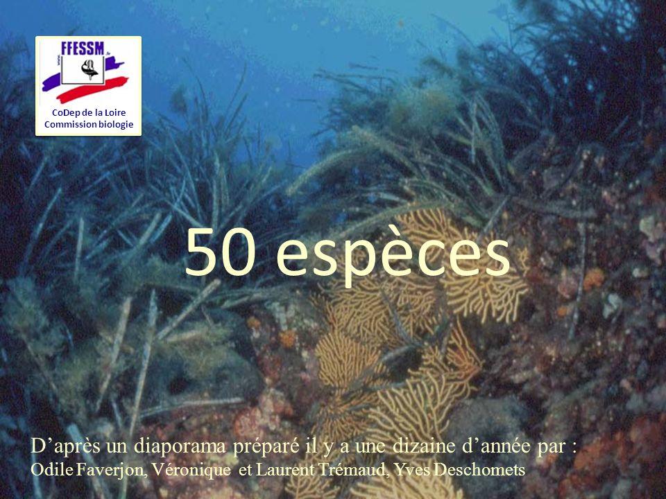 CoDep de la Loire Commission biologie. 50 espèces. D'après un diaporama préparé il y a une dizaine d'année par :