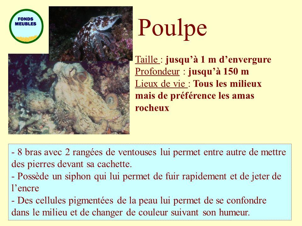 Poulpe Taille : jusqu'à 1 m d'envergure Profondeur : jusqu'à 150 m
