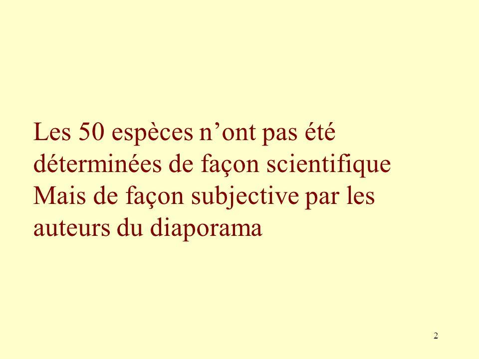 Les 50 espèces n'ont pas été déterminées de façon scientifique