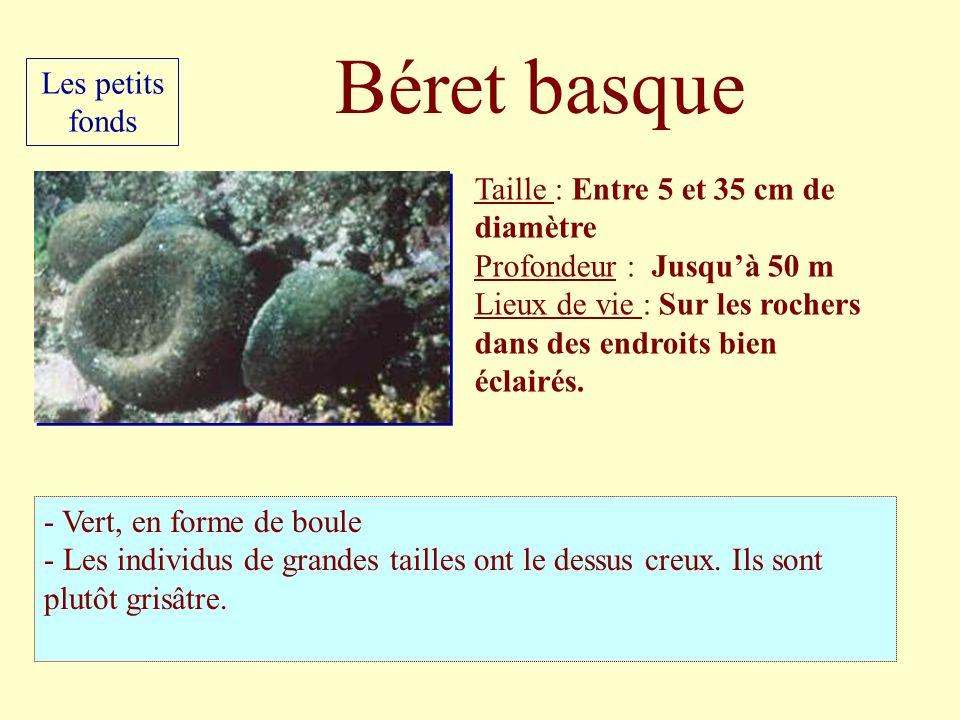 Béret basque Les petits fonds Taille : Entre 5 et 35 cm de diamètre