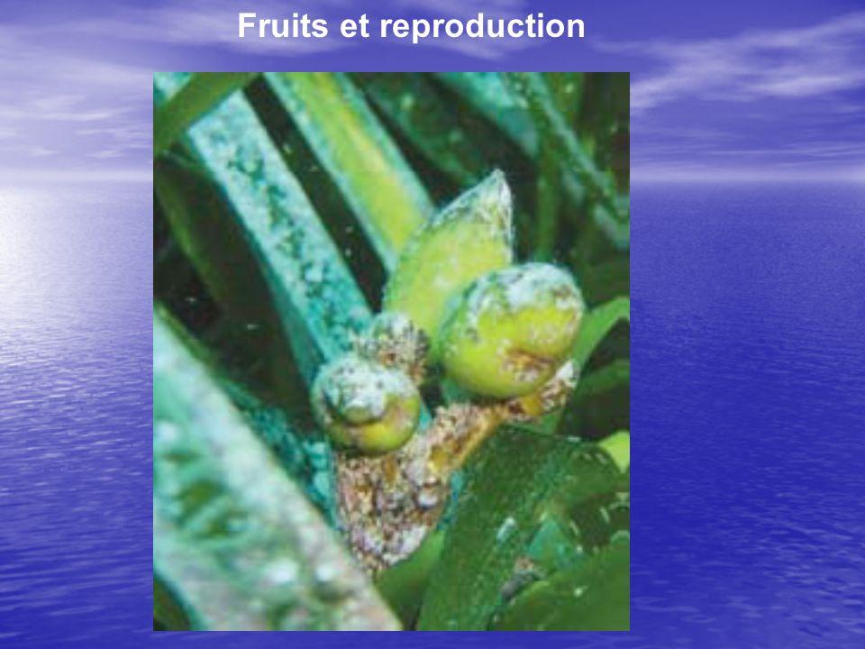 Fruits et reproduction