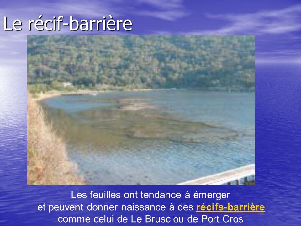 Le récif-barrière Les feuilles ont tendance à émerger