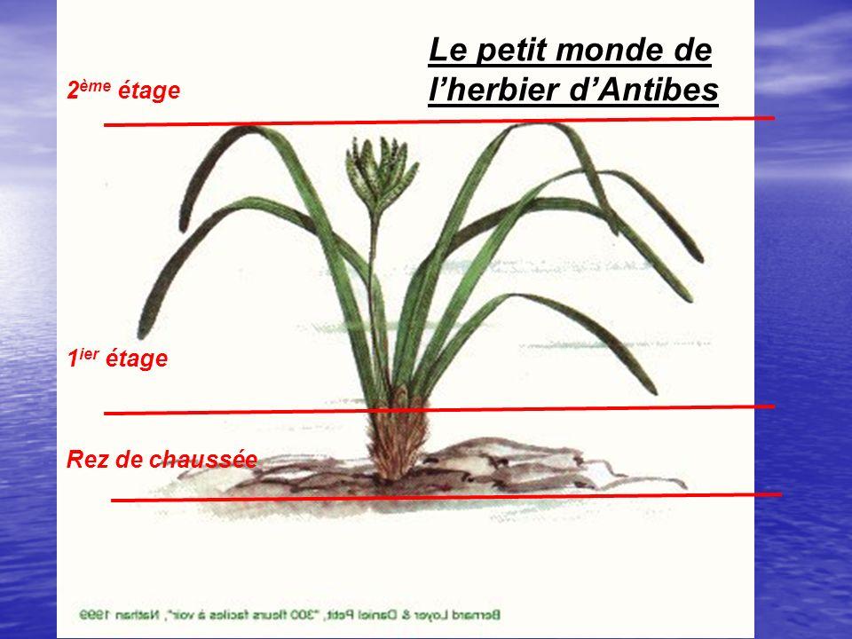Le petit monde de l'herbier d'Antibes