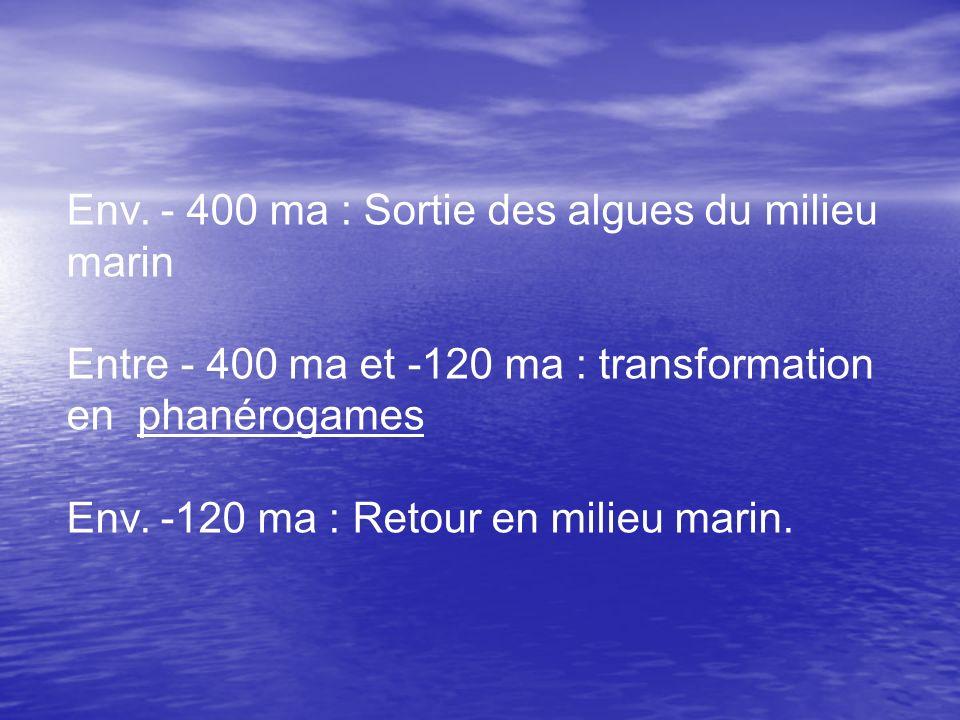 Env. - 400 ma : Sortie des algues du milieu marin