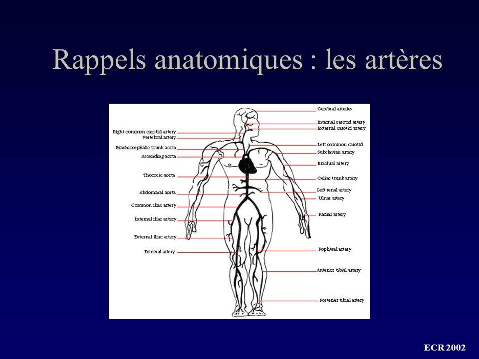 Rappels anatomiques : les artères