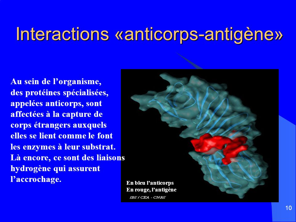 Interactions «anticorps-antigène»