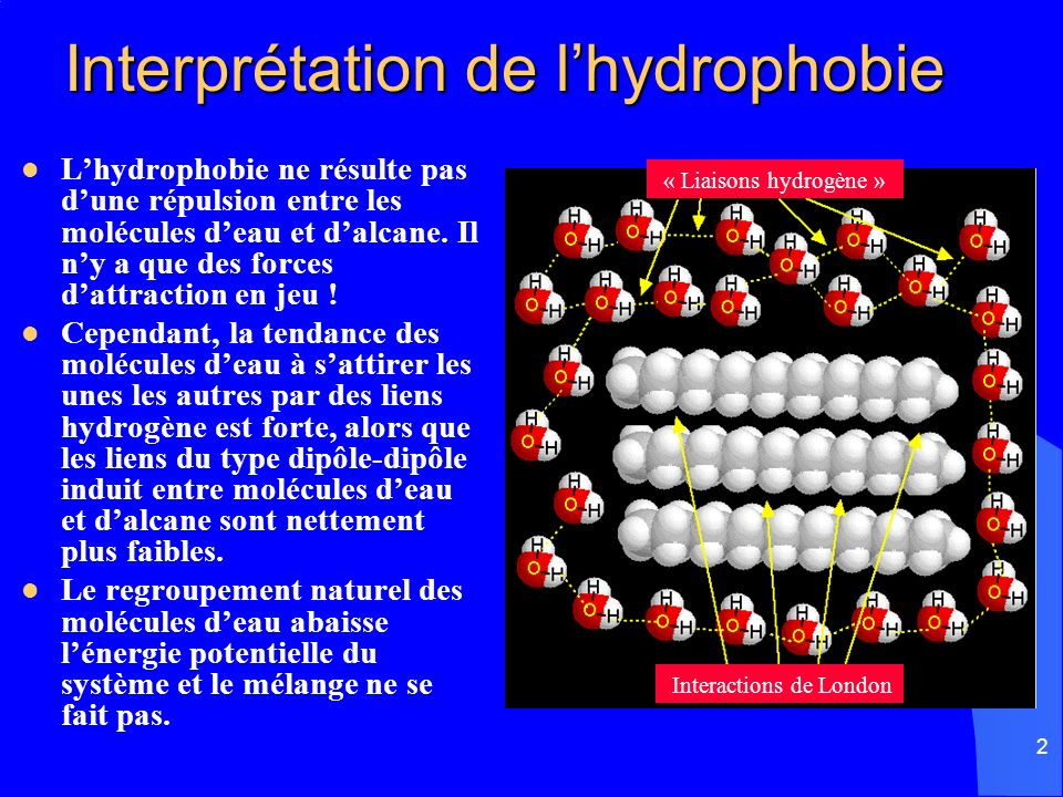 Interprétation de l'hydrophobie