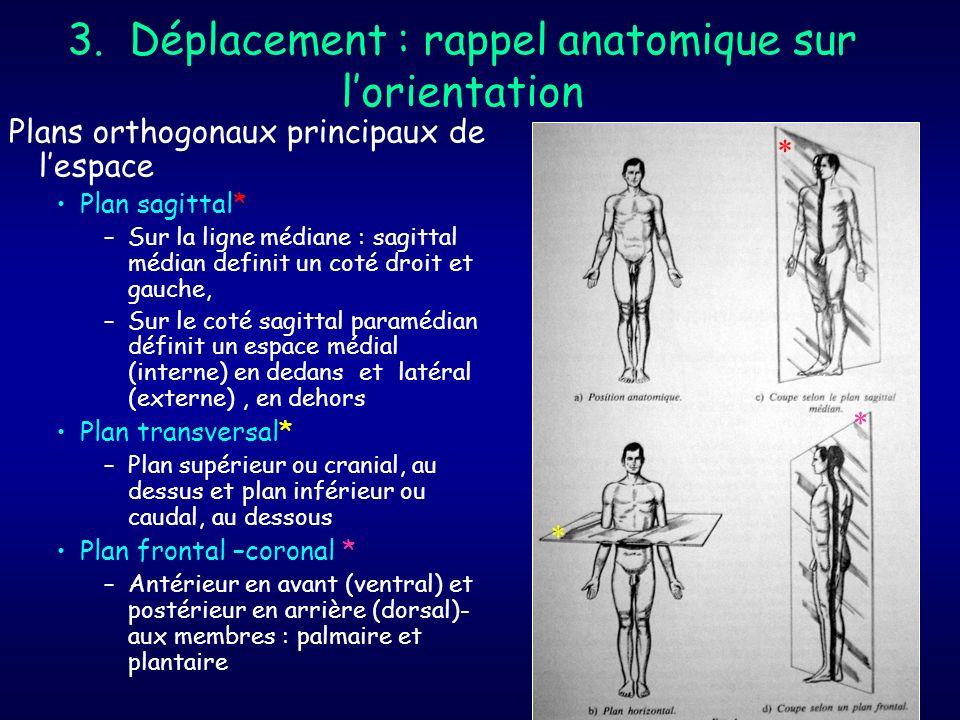 3. Déplacement : rappel anatomique sur l'orientation