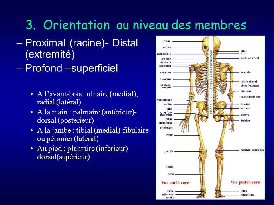 3. Orientation au niveau des membres