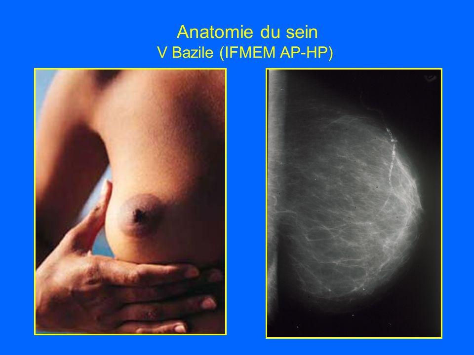 Anatomie du sein V Bazile (IFMEM AP-HP)