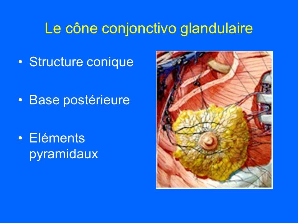 Le cône conjonctivo glandulaire