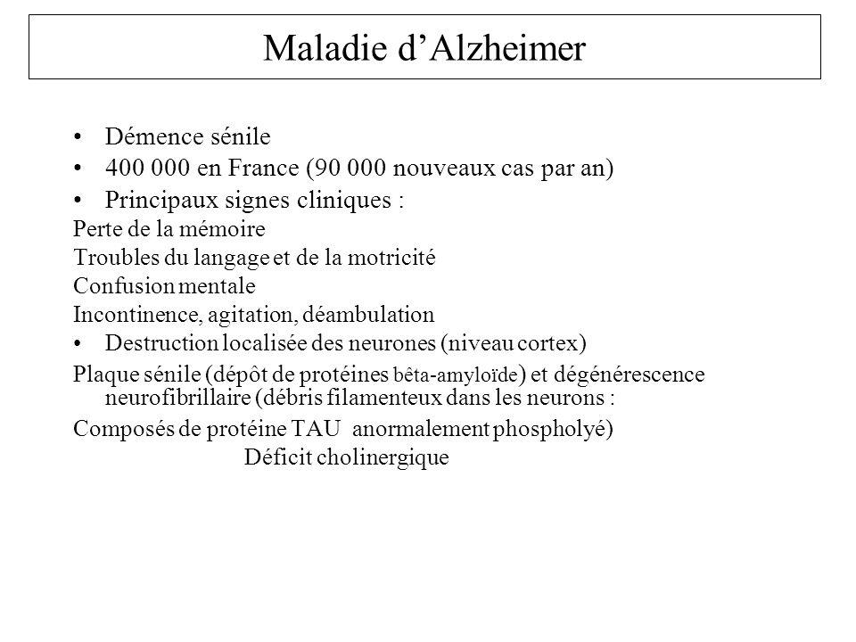 Maladie d'Alzheimer Démence sénile