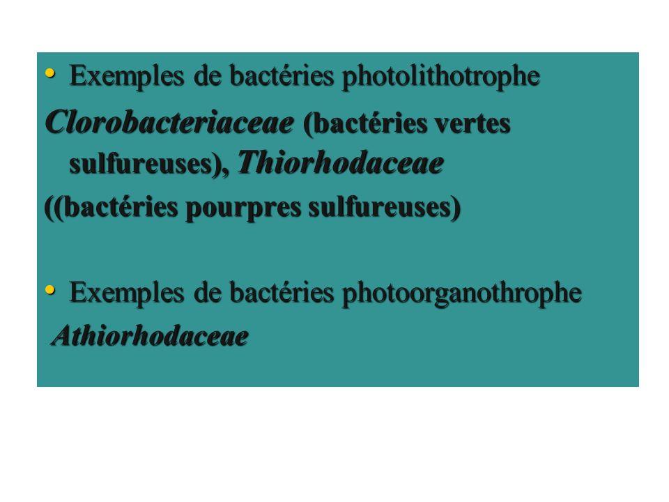 Clorobacteriaceae (bactéries vertes sulfureuses), Thiorhodaceae
