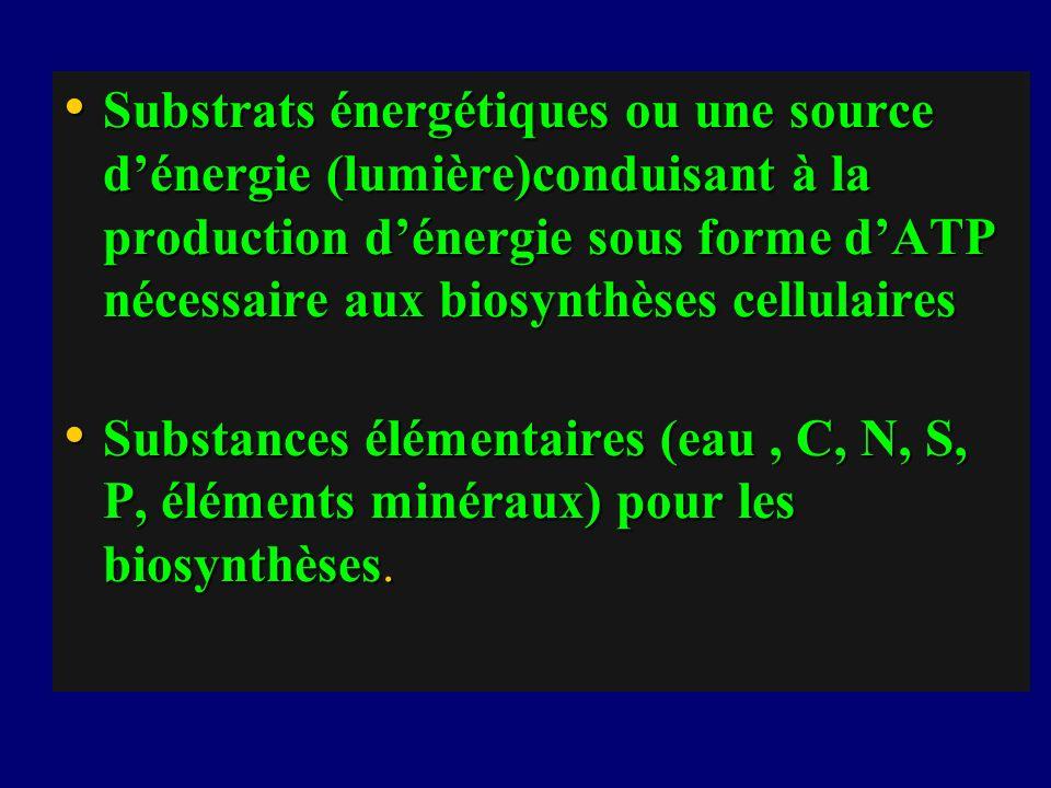Substrats énergétiques ou une source d'énergie (lumière)conduisant à la production d'énergie sous forme d'ATP nécessaire aux biosynthèses cellulaires