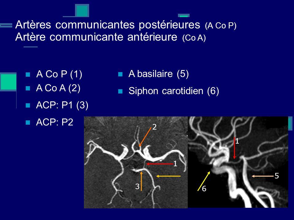 Artères communicantes postérieures (A Co P) Artère communicante antérieure (Co A)