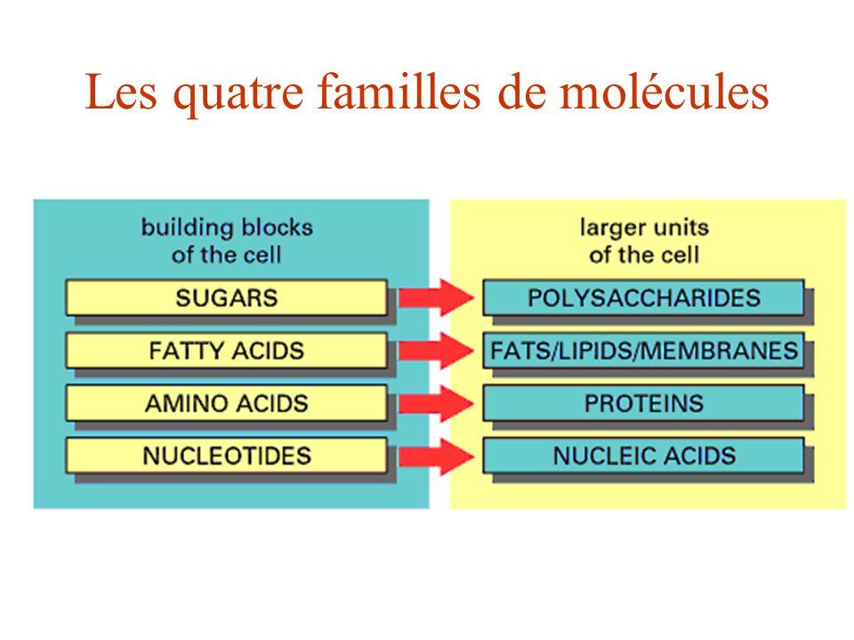 Les quatre familles de molécules