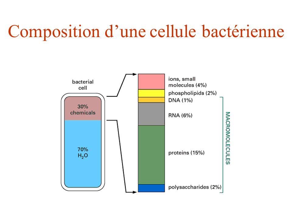 Composition d'une cellule bactérienne