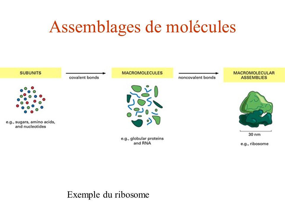 Assemblages de molécules