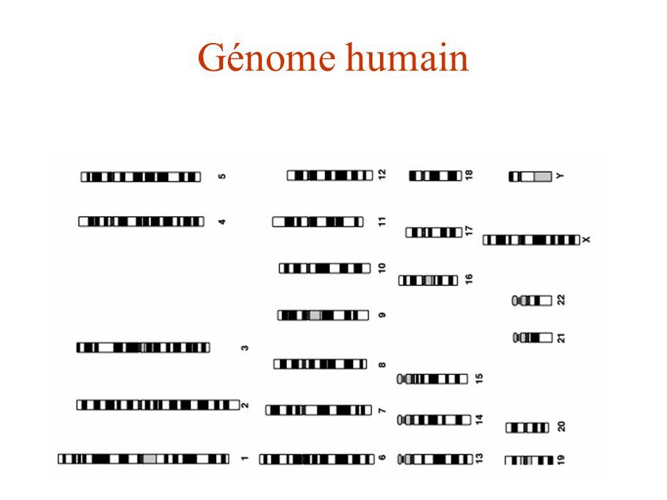 Génome humain