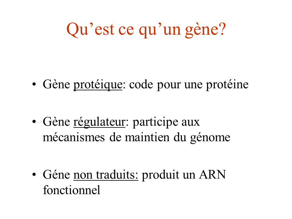 Qu'est ce qu'un gène Gène protéique: code pour une protéine