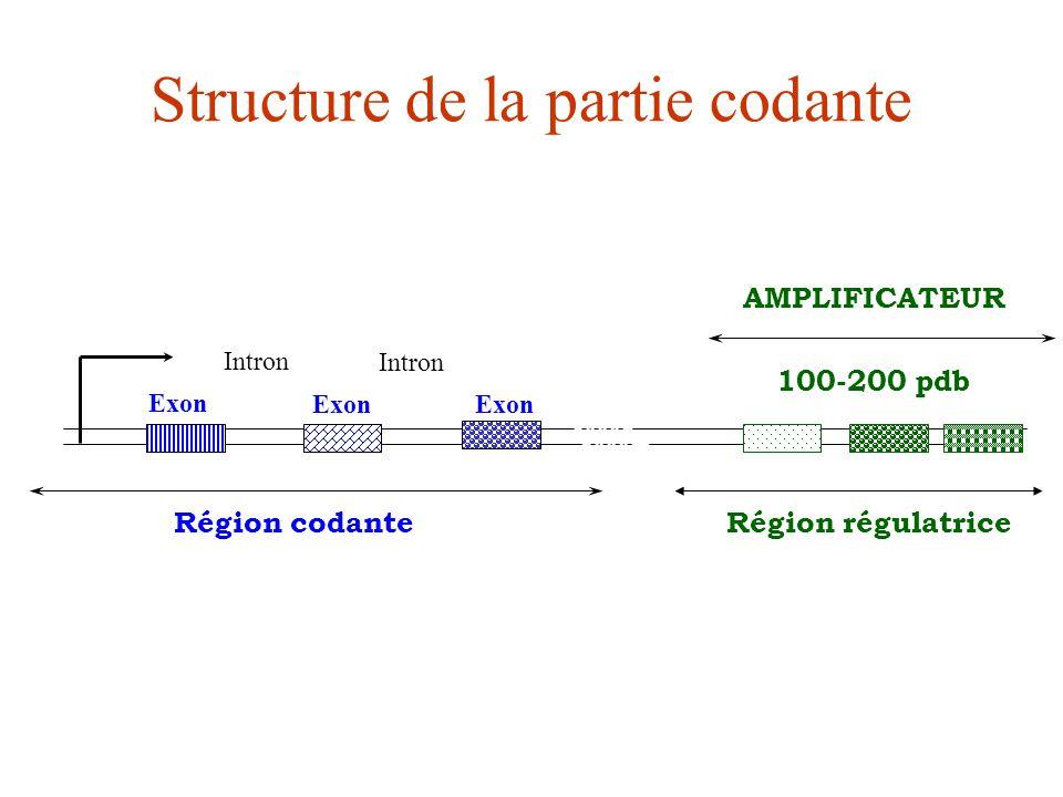 Structure de la partie codante