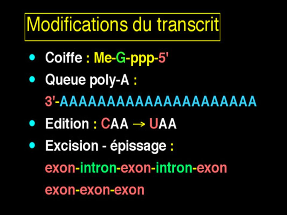 Maturation du transcrit primaire
