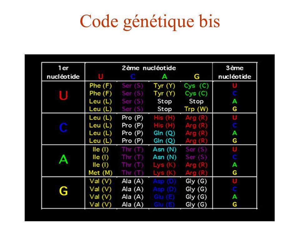 Code génétique bis