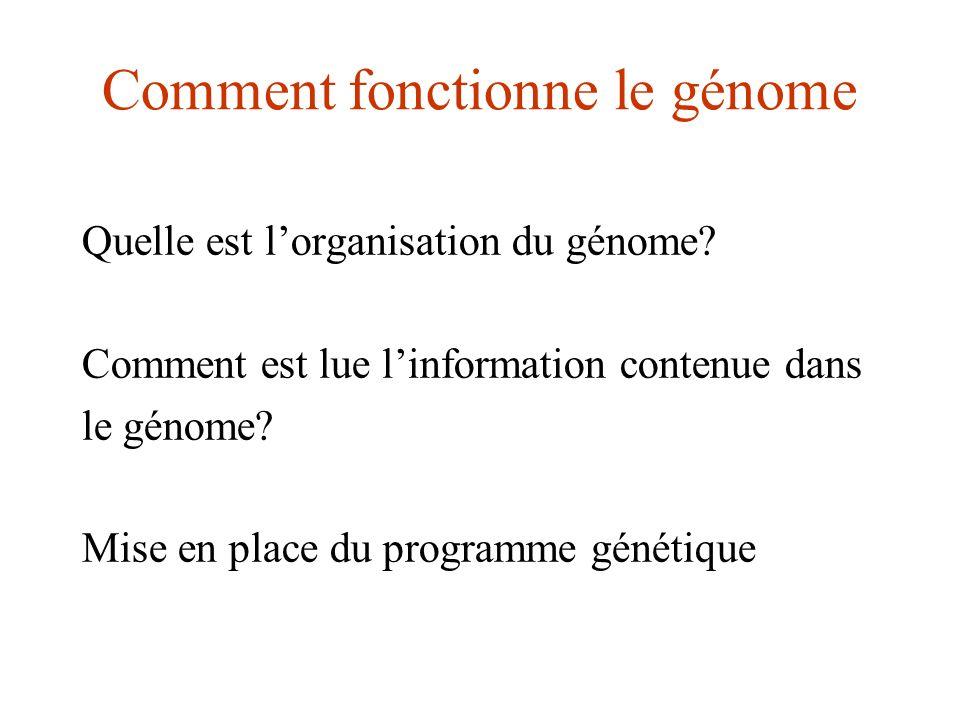 Comment fonctionne le génome