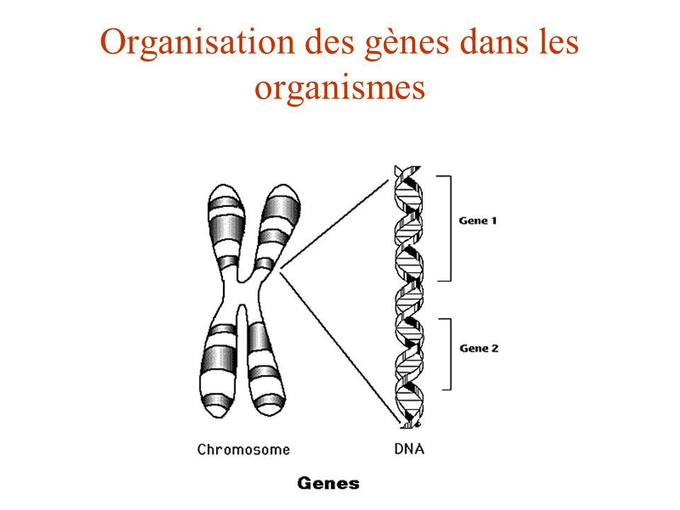 Organisation des gènes dans les organismes