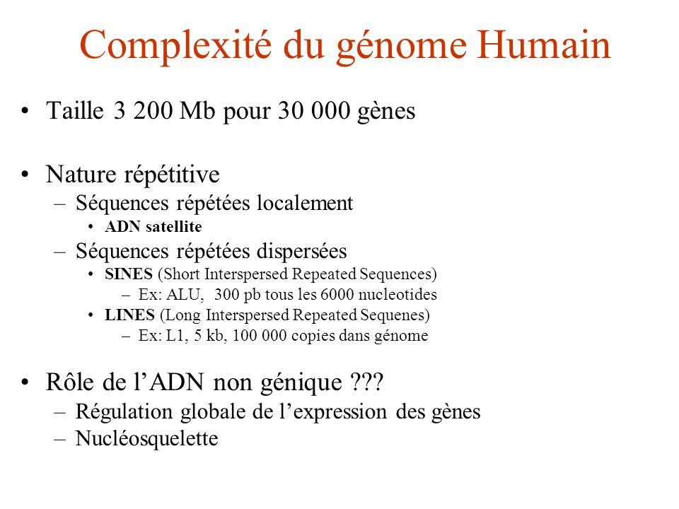 Complexité du génome Humain