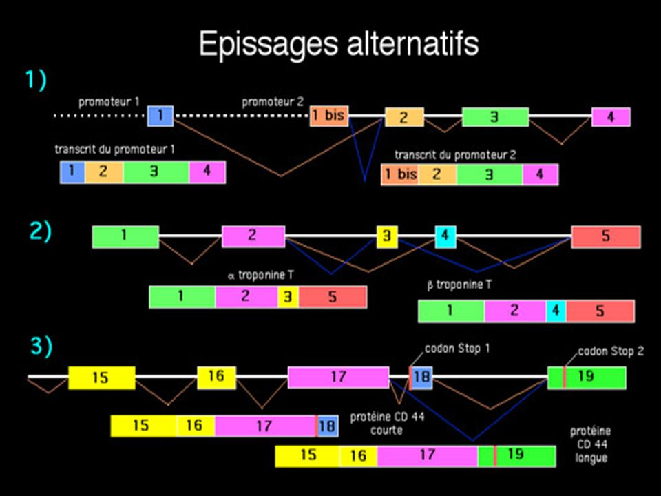 Epissages alternatifs