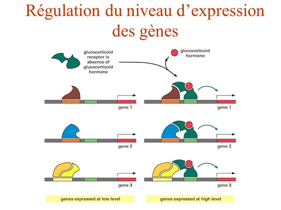 Régulation du niveau d'expression des gènes