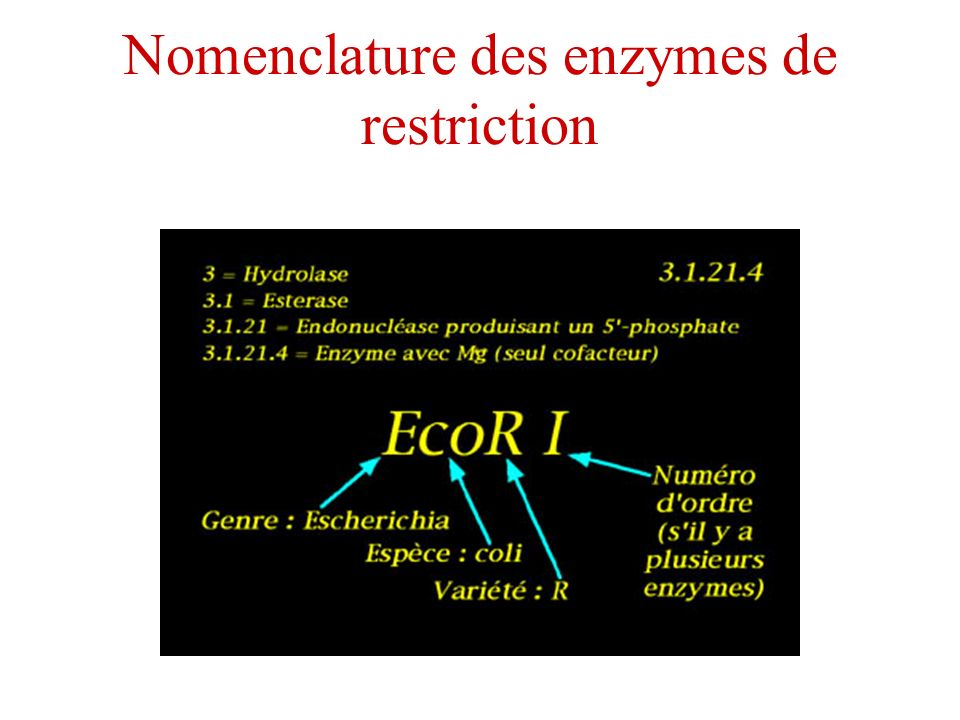 Nomenclature des enzymes de restriction