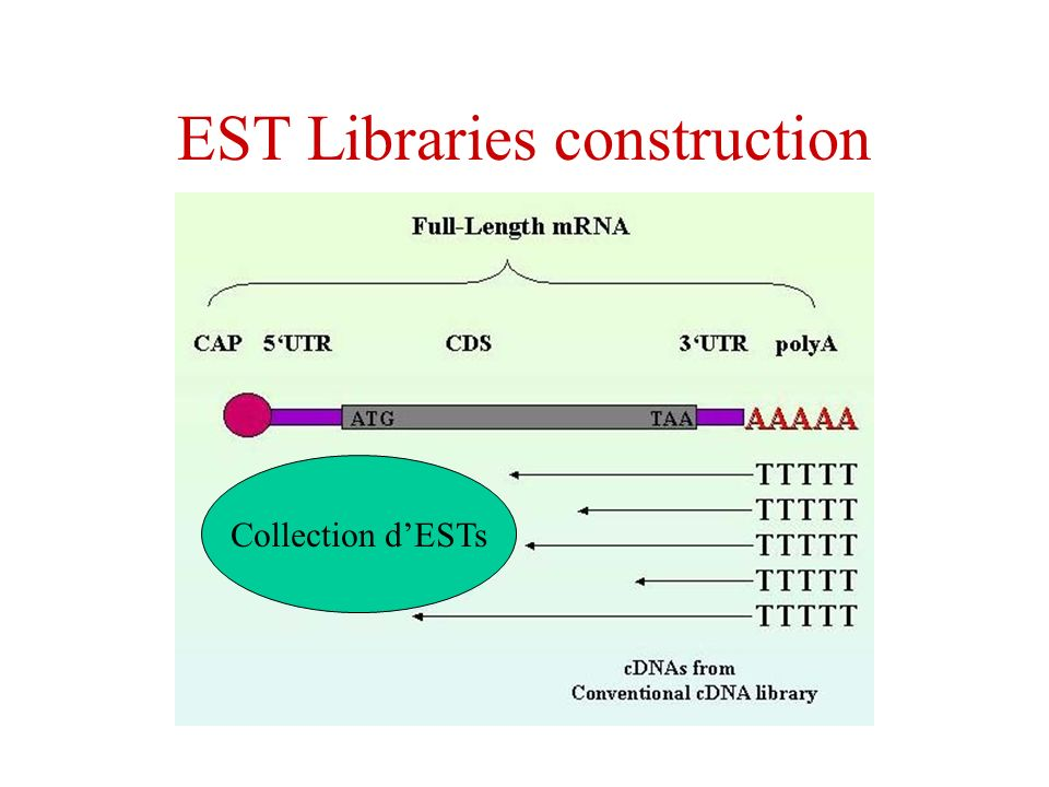EST Libraries construction