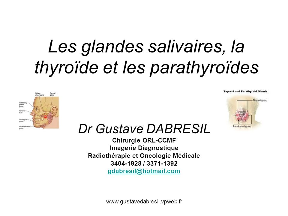 Les glandes salivaires, la thyroïde et les parathyroïdes