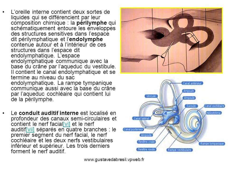 L'oreille interne contient deux sortes de liquides qui se différencient par leur composition chimique : la périlymphe qui schématiquement entoure les enveloppes des structures sensitives dans l'espace dit périlymphatique et l'endolymphe contenue autour et à l'intérieur de ces structures dans l'espace dit endolymphatique. L'espace endolymphatique communique avec la base du crâne par l'aqueduc du vestibule. Il contient le canal endolymphatique et se termine au niveau du sac endolymphatique. La rampe tympanique communique aussi avec la base du crâne par l'aqueduc cochléaire qui contient lui de la périlymphe.