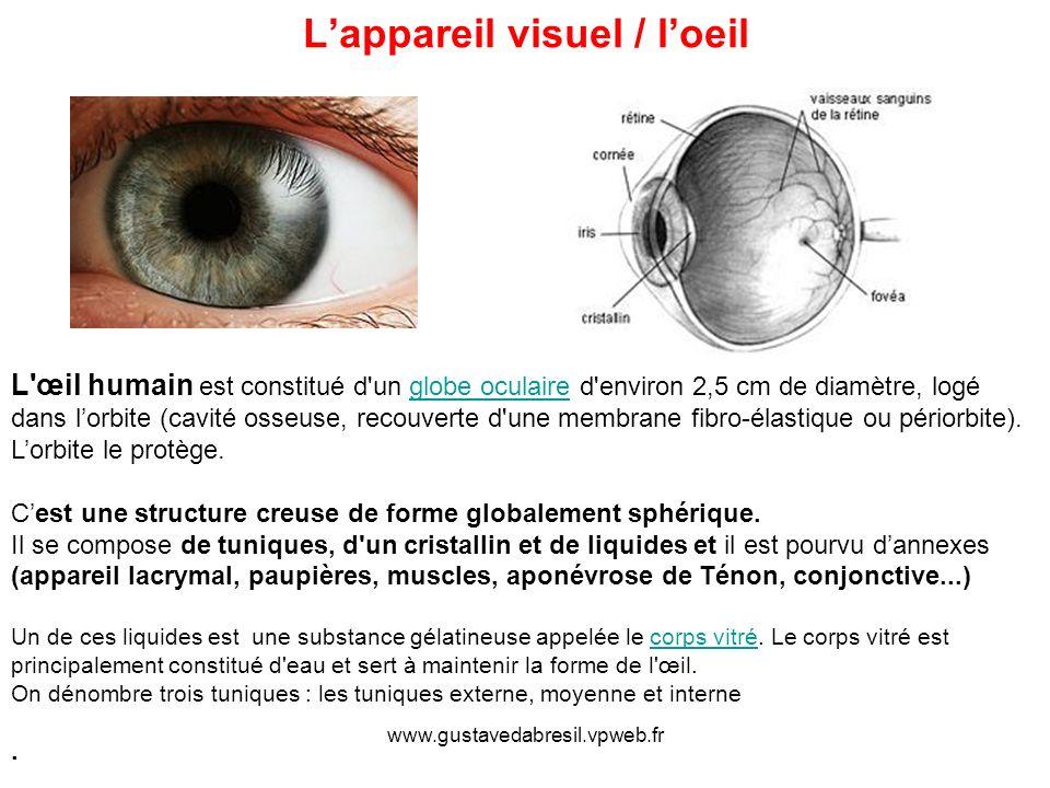 L'appareil visuel / l'oeil