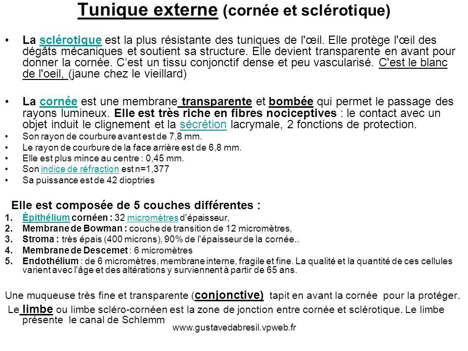 Tunique externe (cornée et sclérotique)