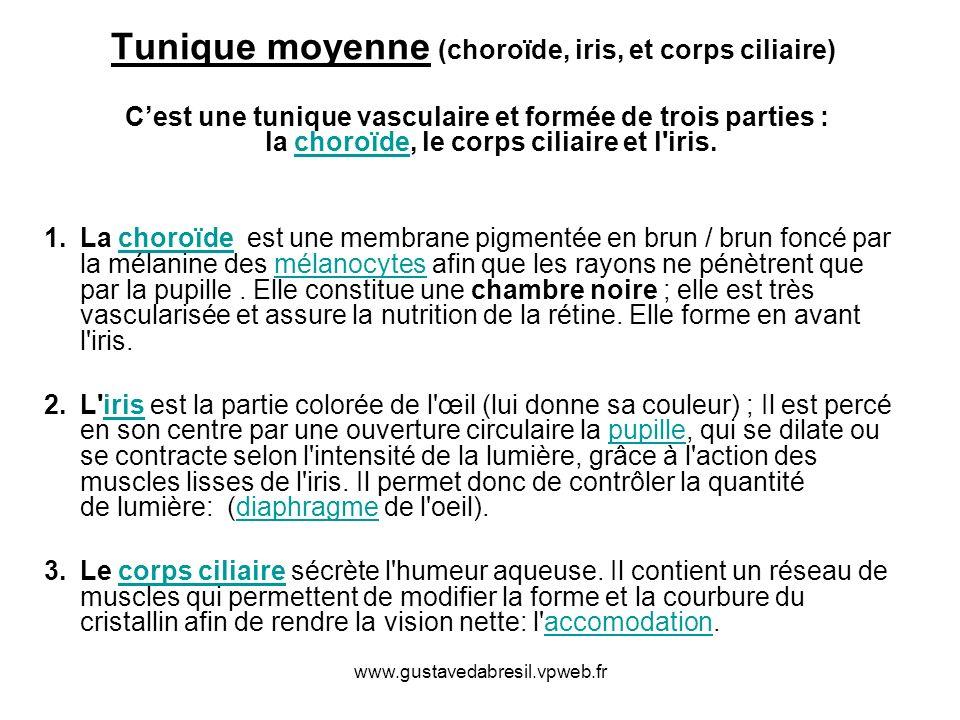 Tunique moyenne (choroïde, iris, et corps ciliaire)