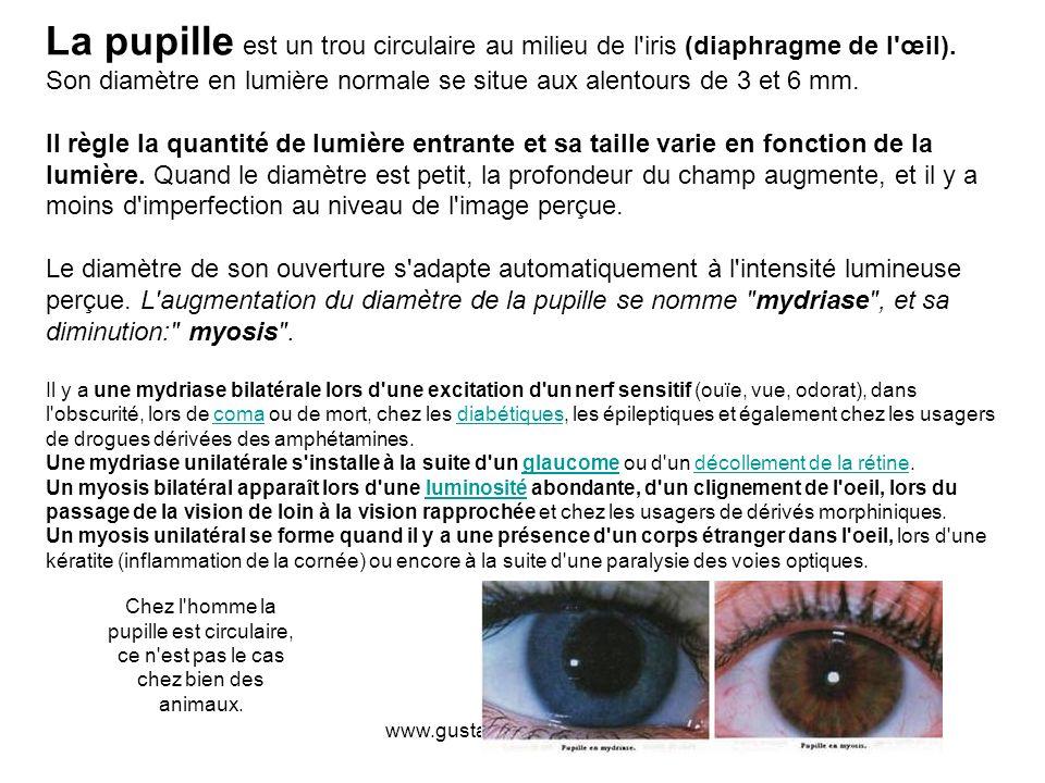 La pupille est un trou circulaire au milieu de l iris (diaphragme de l œil). Son diamètre en lumière normale se situe aux alentours de 3 et 6 mm.