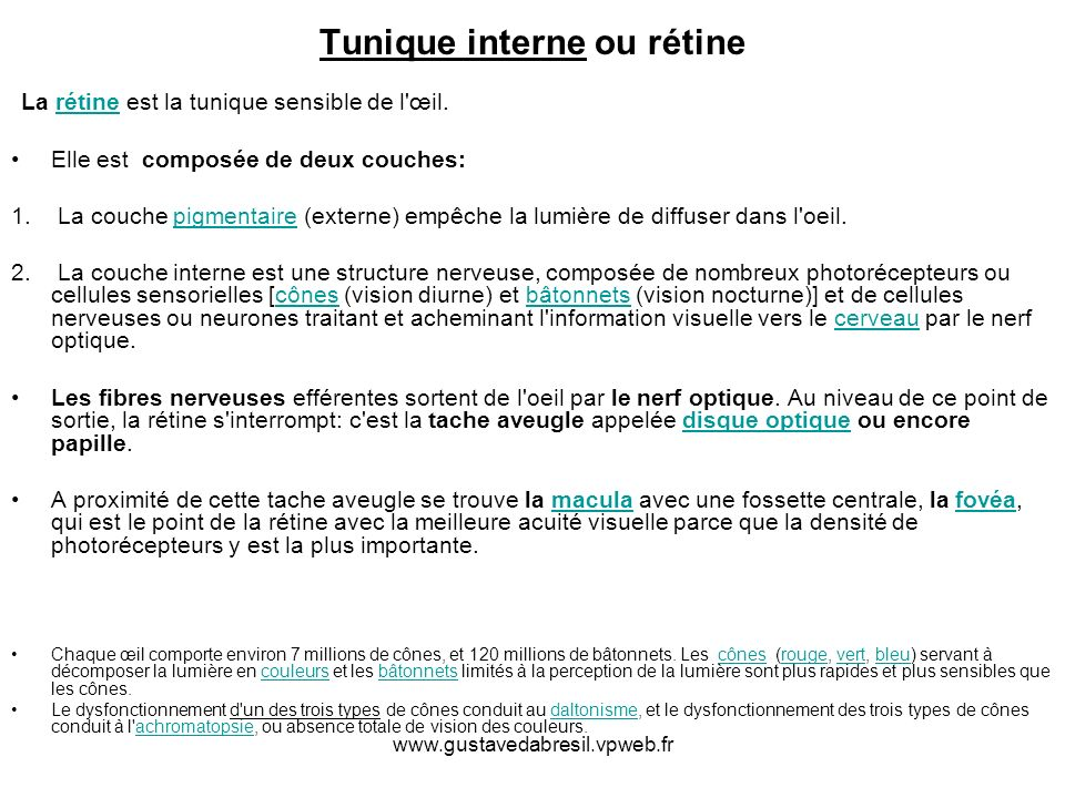 Tunique interne ou rétine