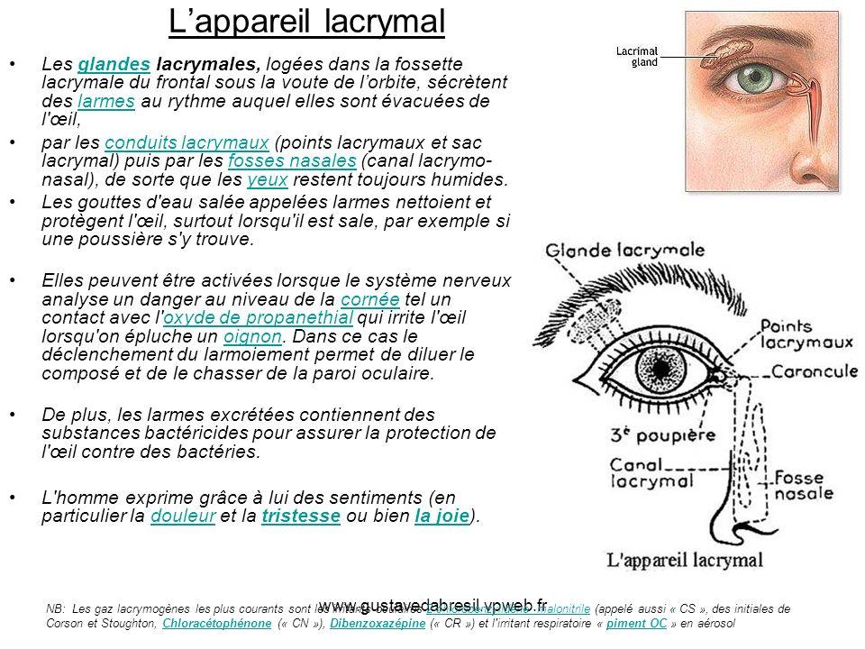 L'appareil lacrymal