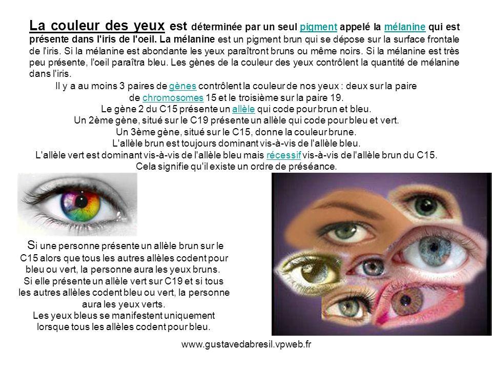 La couleur des yeux est déterminée par un seul pigment appelé la mélanine qui est présente dans l iris de l oeil. La mélanine est un pigment brun qui se dépose sur la surface frontale de l iris. Si la mélanine est abondante les yeux paraîtront bruns ou même noirs. Si la mélanine est très peu présente, l oeil paraîtra bleu. Les gènes de la couleur des yeux contrôlent la quantité de mélanine dans l iris.