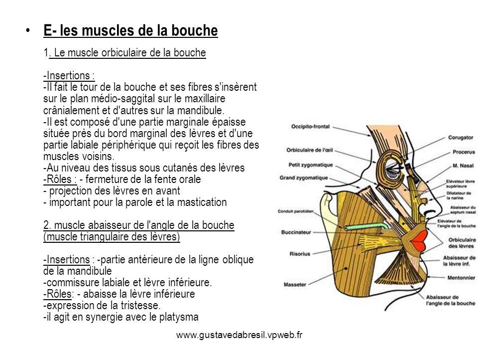 E- les muscles de la bouche 1