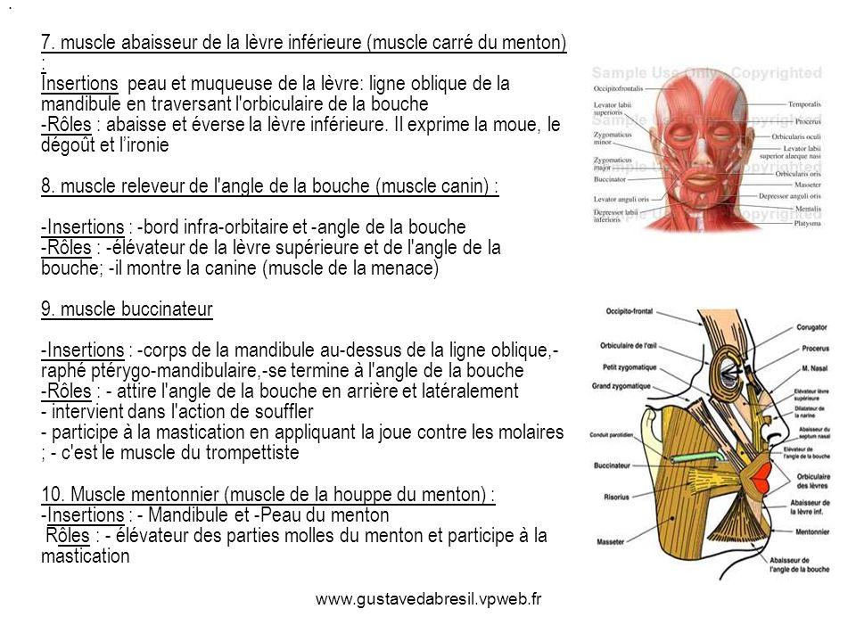 7. muscle abaisseur de la lèvre inférieure (muscle carré du menton) : Insertions peau et muqueuse de la lèvre: ligne oblique de la mandibule en traversant l orbiculaire de la bouche -Rôles : abaisse et éverse la lèvre inférieure. Il exprime la moue, le dégoût et l'ironie 8. muscle releveur de l angle de la bouche (muscle canin) : -Insertions : -bord infra-orbitaire et -angle de la bouche -Rôles : -élévateur de la lèvre supérieure et de l angle de la bouche; -il montre la canine (muscle de la menace) 9. muscle buccinateur -Insertions : -corps de la mandibule au-dessus de la ligne oblique,-raphé ptérygo-mandibulaire,-se termine à l angle de la bouche -Rôles : - attire l angle de la bouche en arrière et latéralement - intervient dans l action de souffler - participe à la mastication en appliquant la joue contre les molaires ; - c est le muscle du trompettiste 10. Muscle mentonnier (muscle de la houppe du menton) : -Insertions : - Mandibule et -Peau du menton Rôles : - élévateur des parties molles du menton et participe à la mastication