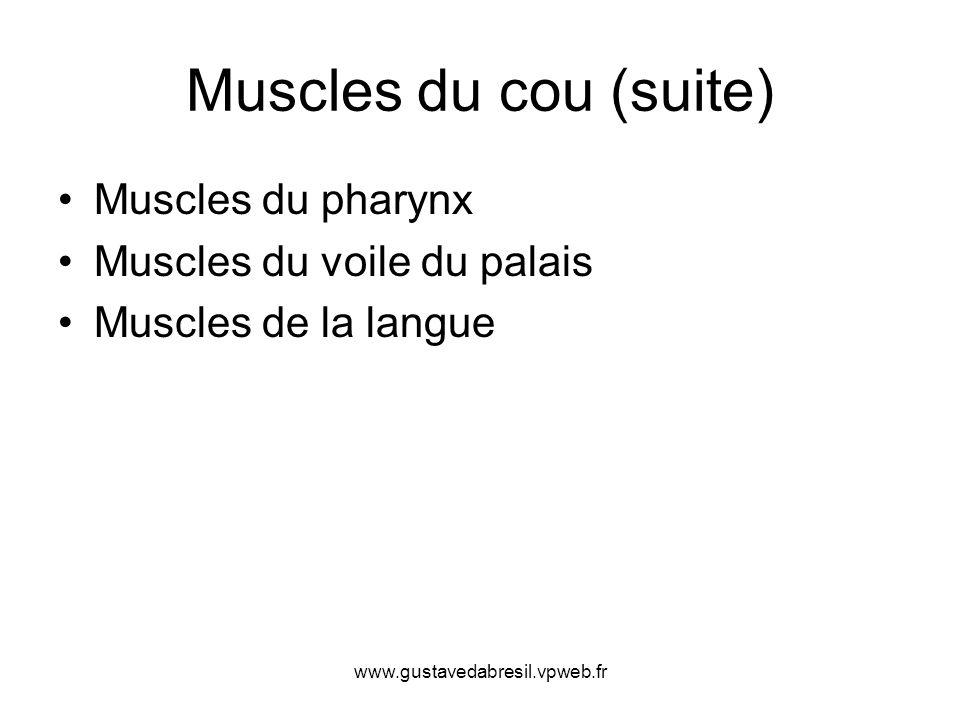 Muscles du cou (suite) Muscles du pharynx Muscles du voile du palais