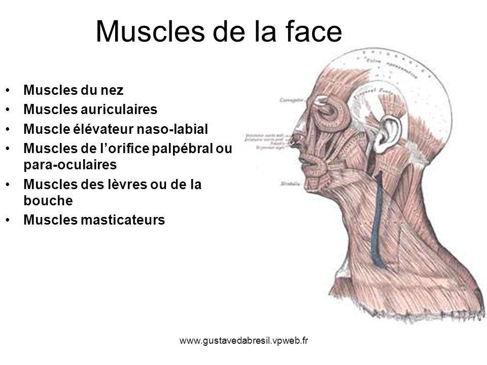 Muscles de la face Muscles du nez Muscles auriculaires