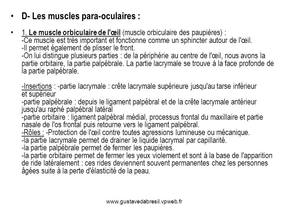 D- Les muscles para-oculaires :