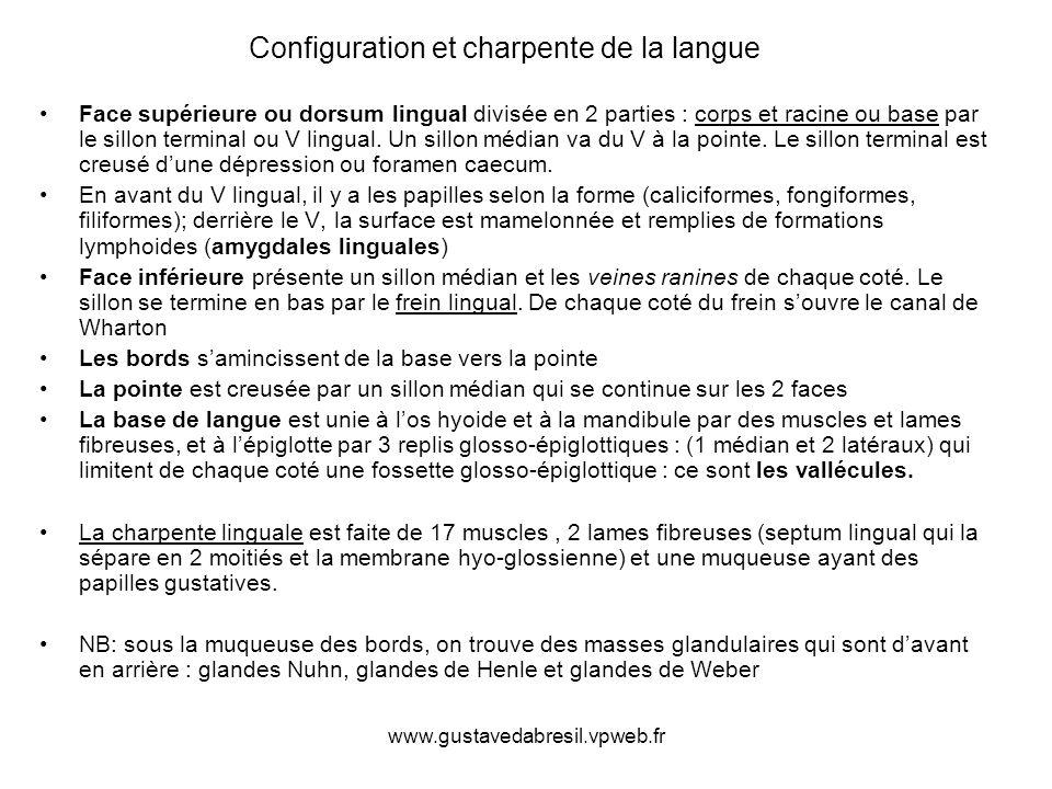 Configuration et charpente de la langue